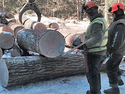 nefco newsletter summer 2015 timber harvest article image